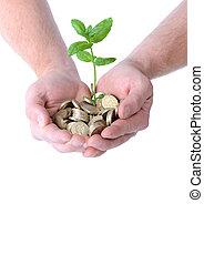 argent, croissance, mains