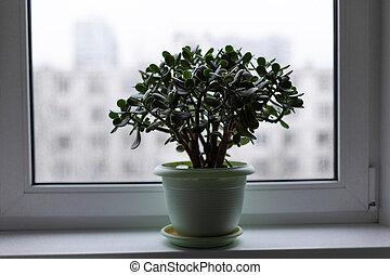argent, pot, arbre, rebord fenêtre