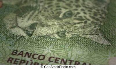 Argentinian Pesos Close-up