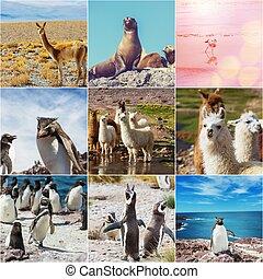 argentyna, zwierzęta