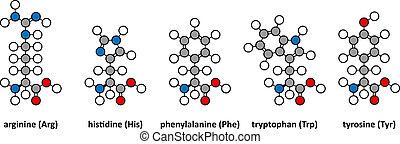 Arginine, histidine, phenylalanine, tryptophan and tyrosine...