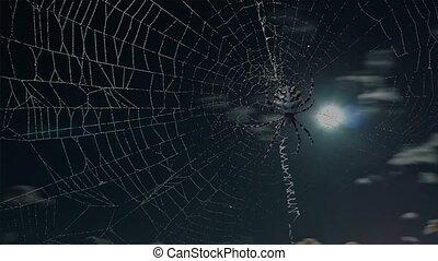 argiope, timelapse, araignés