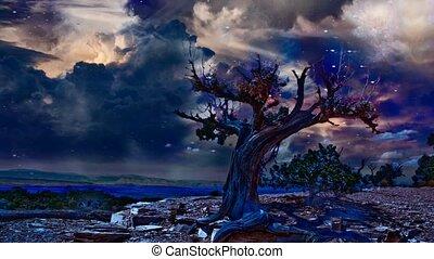 aride, terre, arbre, rocheux, vieux