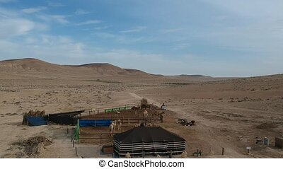 Ariel view above ranch of camels in the desert - Fly over...