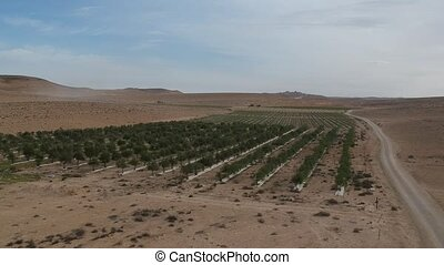 Ariel view of the Negev Desert plantation of trees