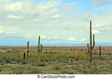 arizona, öken, motorväg