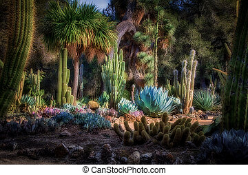 Arizona Cactus Garden on the grounds of Standford University