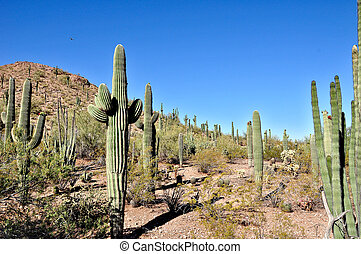 Arizona desert and cactus