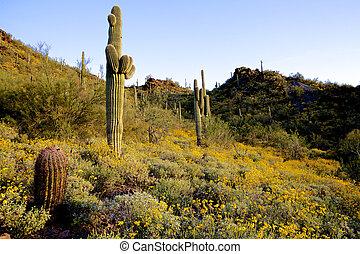 Arizona Desert Bloom
