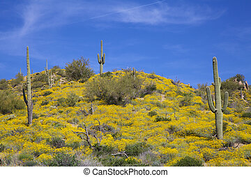 Arizona Desert in Spring
