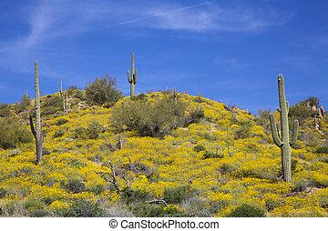 Arizona Desert in Spring