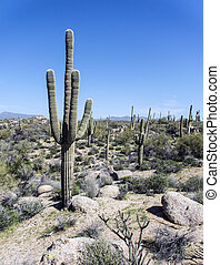 Arizona desert landscape view
