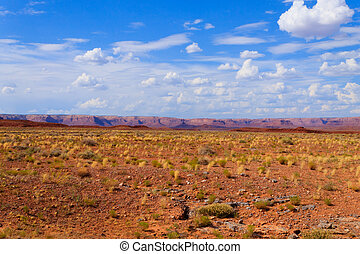 Arizona desert panorama. Yellow bush and blue sky with red mountains in background. USA landscape