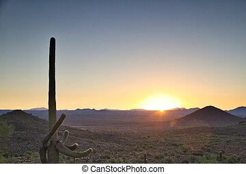 Arizona Desert Sunrise with a Clear Blue Sky