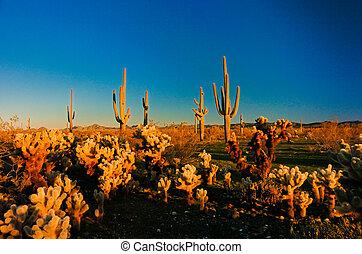 Arizona Desert waking up