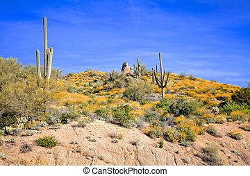 Arizona Desert Wildflowers