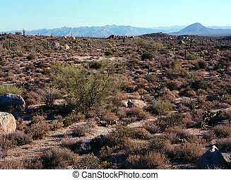 arizona, deserto, sonora