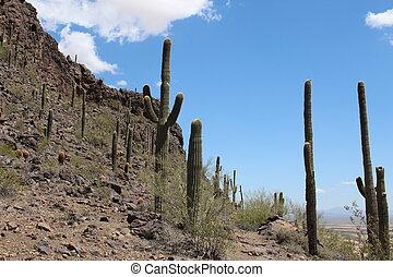 Arizona Hill with Saguaro Cactus