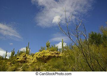 arizona, landscape