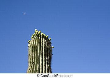 Arizona Saguaro and Moon