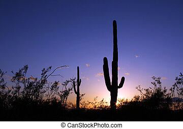 Arizona Sky sunset - Silhouetted Saguaro in the southwest...