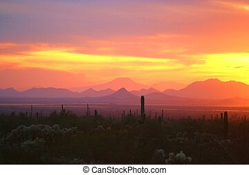Arizona Sunset 1 - Sunset over the sonoran desert near...