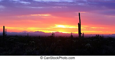 Sunset over the Sonoran Desert east of Florence Arizona.
