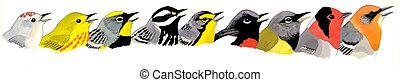 Arizona Warblers - nine species found in Arizona