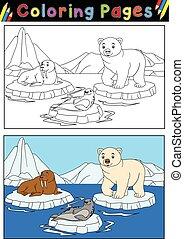 arktisch, färbung, tiere, buch