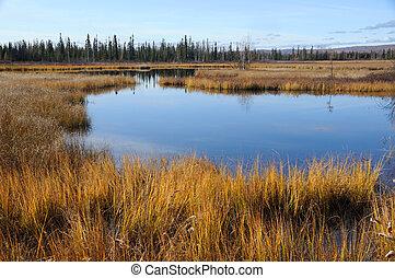 arktisch, sumpfgebiet, alaska