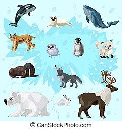 arktyka, komplet, fauna, rysunek