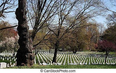 Arlington Cemetery Tombs - tree - Arlington National...