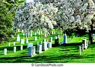 Arlington National Cemetery near to Washington DC, in Spring...