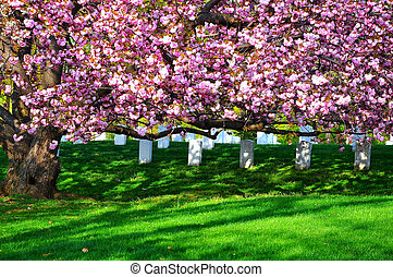 Arlington National Cemetery near to Washington DC, in Spring...