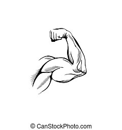 Arm muscles (sketch mans hand on white)