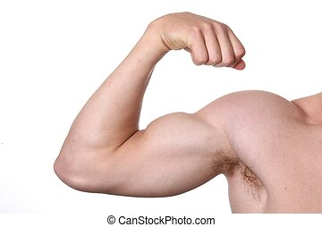 Arm Muscles - Muscular arm and shoulder isolated on white...