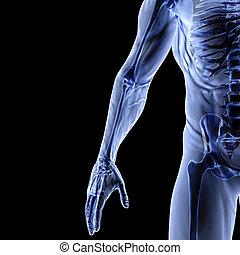 arm - Man's arm under x-rays. isolated on black.
