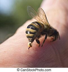 arma, defensa, -, picadura, abeja