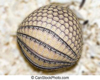 Armadillo Baby Ball