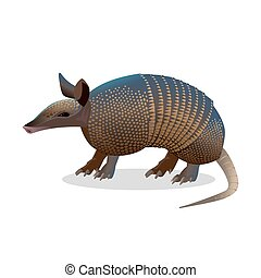 Armadillo isolated. Realistic placental mammal with leathery...
