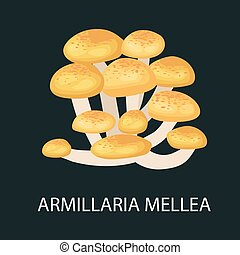 Armillaria mellea isolated, Wild Foraged Mushroom, Vector edible natural mushrooms in nature set, organic vegetable food collection