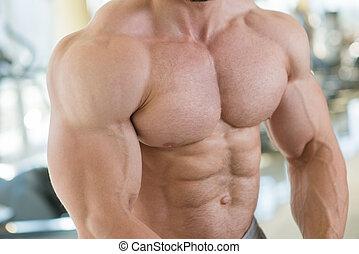 arms., tułów, muskularny