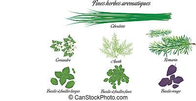 aromático, ervas, cartaz, francês