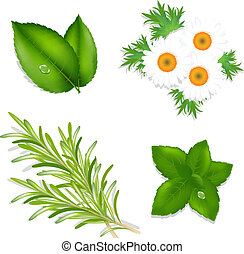 Aroma Herbs, Set From Mint, Camomiles, Rosemary And Tea ...