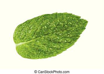 aroma., mentolo, realistico, fresco, menta, illustrazione, isolato, mette foglie, sano, plant., vettore, leaf., verde, menta verde, fondo., erbaceo, natura, bianco