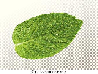 aroma., mentolo, realistico, fresco, trasparente, menta, illustrazione, mette foglie, sano, plant., vettore, leaf., verde, menta verde, fondo., erbaceo, natura