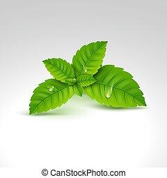 aroma., natura, sano, mentolo, leaf., vettore, verde, mette foglie, erbaceo, fresco, menta, plant., menta verde