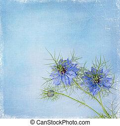 aromate, -, nigella, ou, fleur, plant., blanc, rose, sativa, fleurs, jardin, bleu