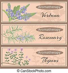 aromathérapie, ensemble, collection.