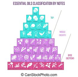 Aromatherapy and essential oils classification infographics